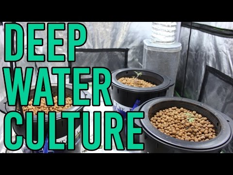 How To Setup a Hydroponic DWC Deep Water Culture System
