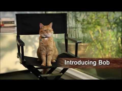 A Street Cat Named Bob - Introducing Bob - At Cinemas November 4