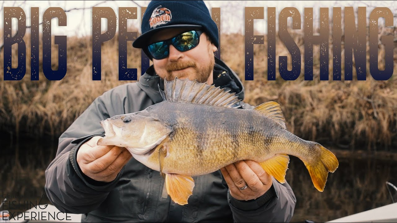 d6f009aca2bf0 Big Perch Fishing - Glen Grant Fishing Experience - YouTube