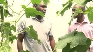Smart Farm: Cucumber Farming