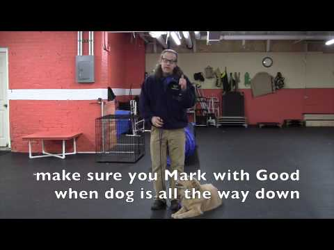 How To Down Command, Leash and Remote Collar Training
