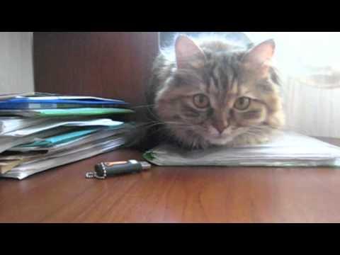кошка лето кот