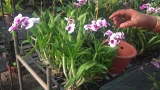 ഇങ്ങനെ വേണം ഓർക്കിഡ് നടാൻ | ചട്ടിയിലും നടാം മരകഷ്ണങ്ങളിലും നടാം | Orchid care and propagation