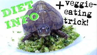 box turtle diet info + new trick to get them eating greens/veggies!