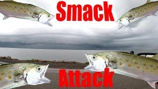 Smack Attack Fishing Texas City Dike Sept 10, 2018