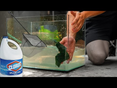 How To Sterilize Fish Tanks, Nets, And Equipment