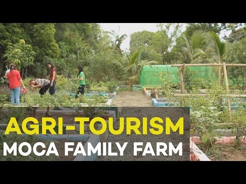 Agri tourism : MoCa Family Farm, agribusiness ideas in the Philippines