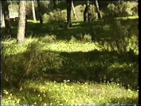 Los pinares de El Puerto