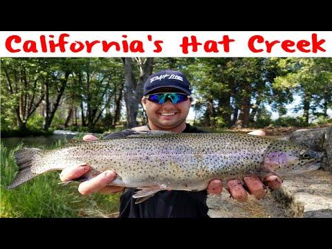 Hat Creek Trout Fishing