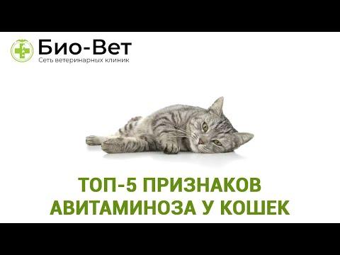 Топ-5 Признаков Авитаминоза У Кошек & Как Помочь Кошке При Авитаминозе. Ветклиника Био-Вет