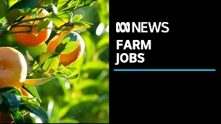 Political scramble to attract farm workers for spring harvest | ABC News