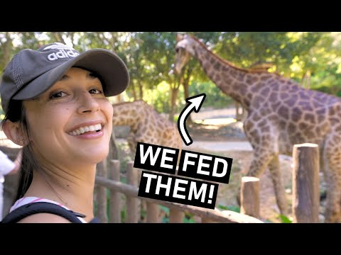 Chiang Mai ZOO in Thailand - Vlog