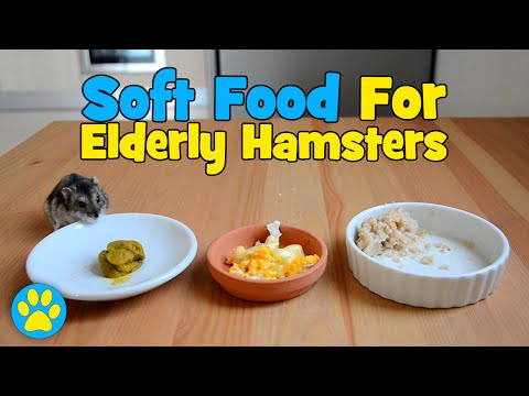 3 Soft Foods For Elderly Hamsters