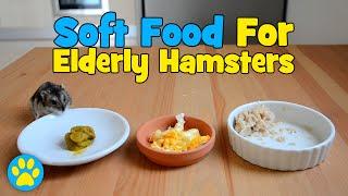3 Soft Foods For Elderly Hamsters