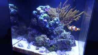 Dan's Aqueon Evolve 8 - Part 3 Nano Reef Build