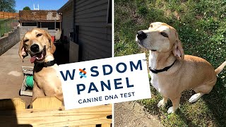 Wisdom Panel Dog DNA Test | Finding out Maple's Breed