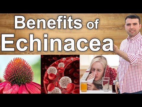 9 Benefits of Echinacea From the Cold to Cancer