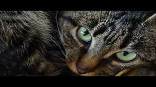 "ttdz_000_026 Sound Mikhail Zykov Р. Киплинг ""Кошка, которая гуляла сама по себе"""