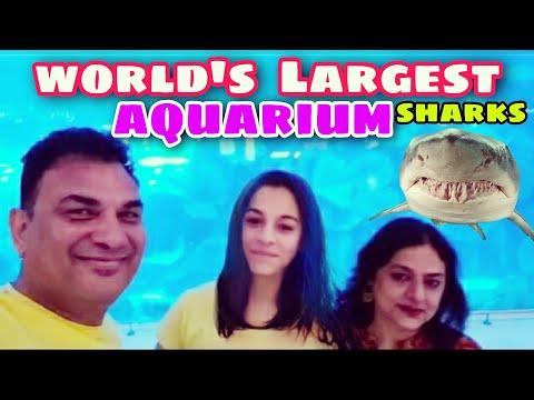 Dubai Under Water Zoo Sharks #shorts – Travel Jockey