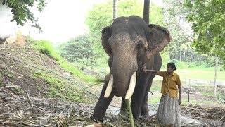 India's only female mahout is redefining elephant ownership thumbnail