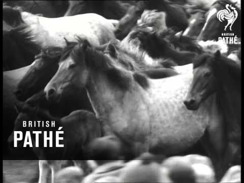 Wild Horse Stud Farm - Dulmen - Germany (1962)