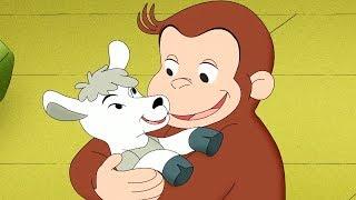 Jorge el Curioso en Español 🐵El Negocio de Jorge y Allie 🐵 Capitulos completos del Mono Jorge