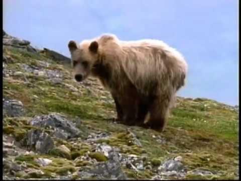 Wild Alaska   Wildlife Refuge   Alaskan Nature Video - Becharof NWR
