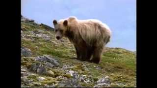 Wild Alaska | Wildlife Refuge | Alaskan Nature Video - Becharof NWR