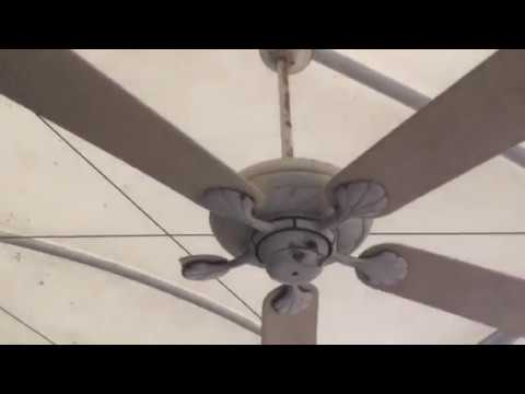 3 52 home decorators collection marshlands 3 53 casblanca lanai ceiling fans