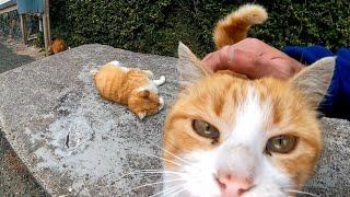 猫島で通りにある謎のベンチに行ったら猫が集まってきた
