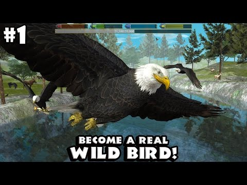 Ultimate Bird Simulator By Gluten Free Games - Android/iOS - Gameplay Part 1