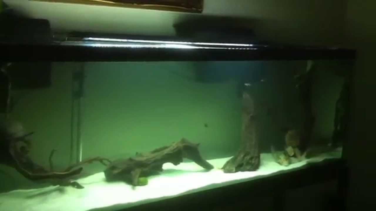 Captivating Piranha Tank Update   New Aquascape   YouTube