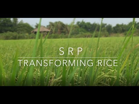 Sustainable Rice Platform: Improving Farmer Livelihoods and Fighting Climate Change