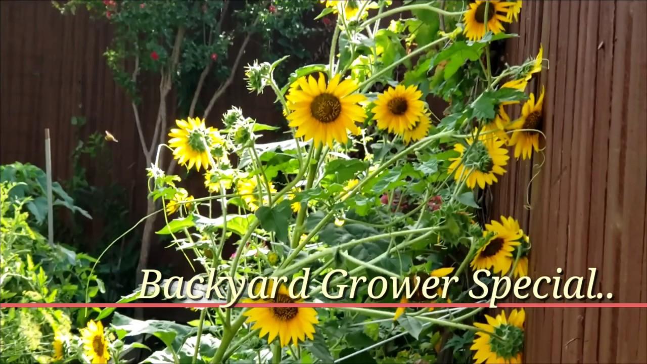 "Backyard Grower'এর পক্ষ থেকে ' ""A Special Clip for all"""