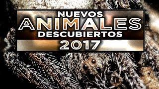 TOP 5 Nuevos ANIMALES descubiertos [Ed. 2017]