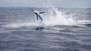 Jeremy Wade Does Battle To The End With The Marlin That Got Away