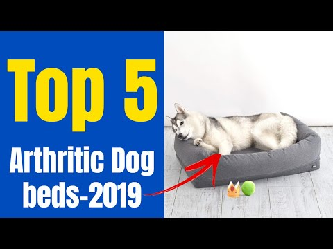 top-5-best-dog-beds-for-arthritic-dogs-in-2019