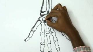 How to Draw a Skeleton Finger