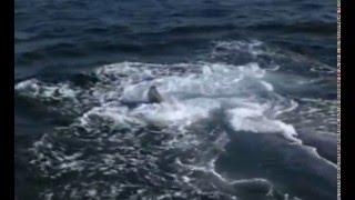 Wieloryby - Tajemniczy mieszkańcy oceanów. Film dokumentalny Część 1/3