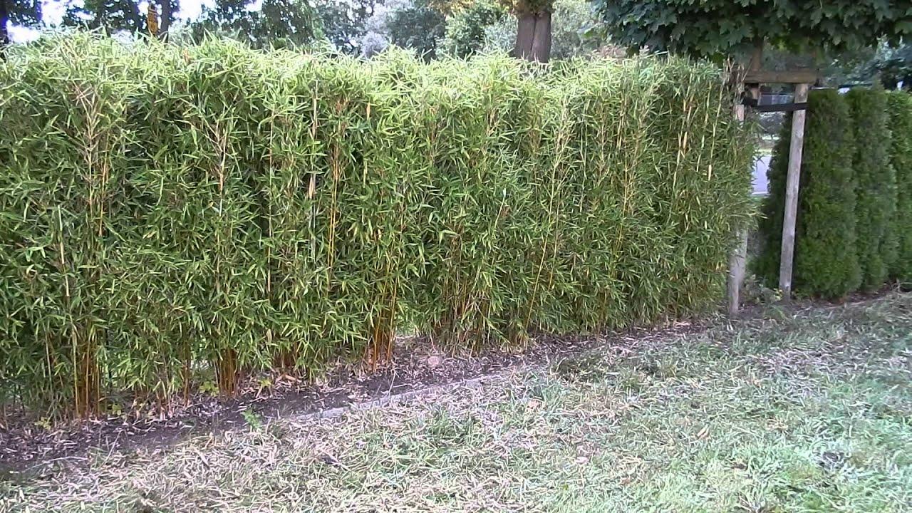 bambus sichtschutz - design more info - Bambus Sichtschutz