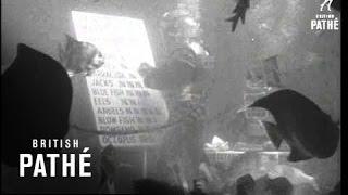 Fish (1948)
