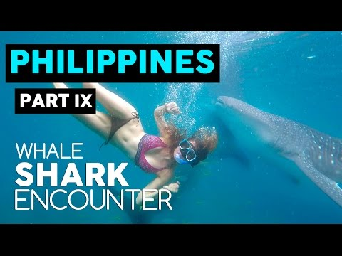 SWIMMING WITH WHALE SHARKS // OSLOB, PHILIPPINES
