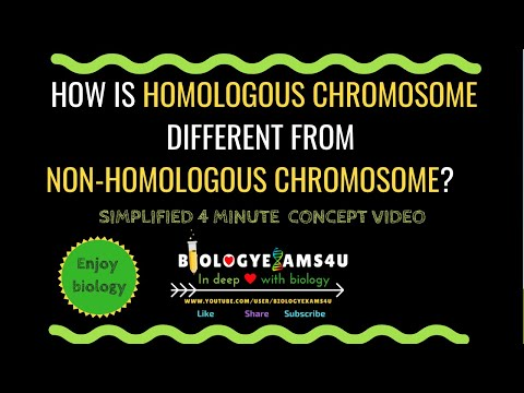 Difference Between Homologous Chromosome And Non Homologous Chromosome.