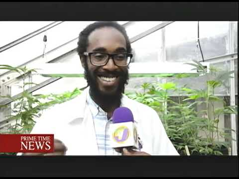 Jamaica Gets Ready For Ganja Industry (TVJ Prime Time News)