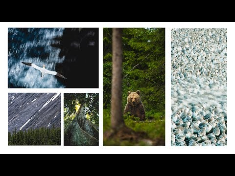 Composition Tips for Wildlife Photography
