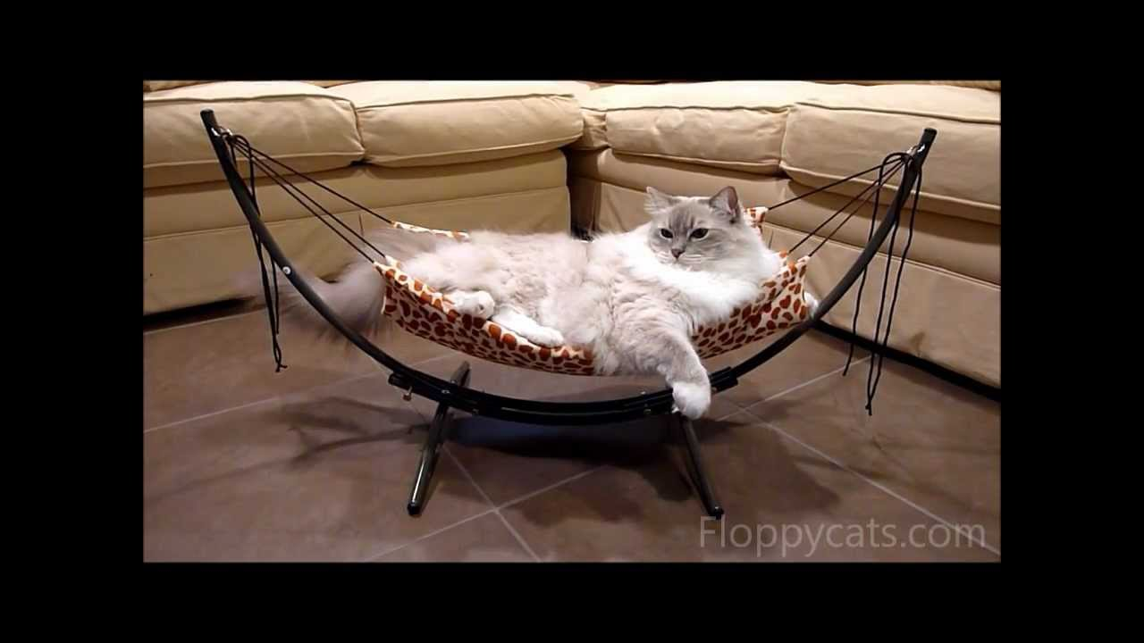 How To Put Together The Trixie Cat Bed Hammock Á�こ