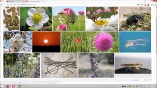 Шаттерсток / Shutterstock . Видео #1.