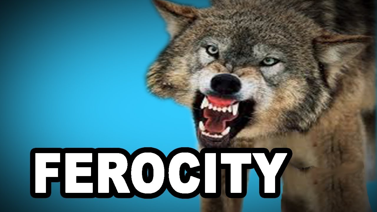 Learn English Words: FEROCITY   Meaning, Vocabulary With Pictures And  Examples