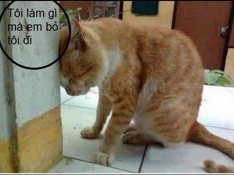 [Funny Cat] Những tình huống hài hước khó đỡ của những chú mèo