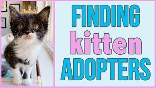 How to Find a Home for a Foster Kitten